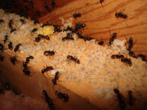 ant_colony135