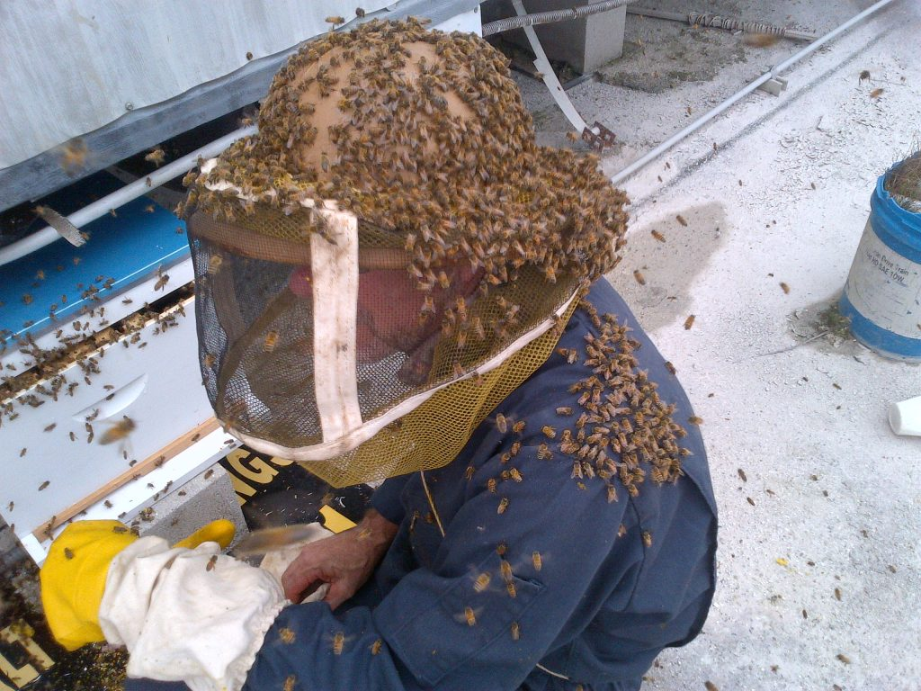 *Simons_bee extraction_courtesy pic